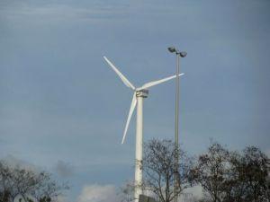 Windmill in Medford
