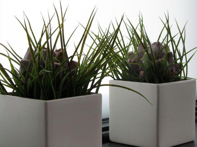 Grass and artichokes